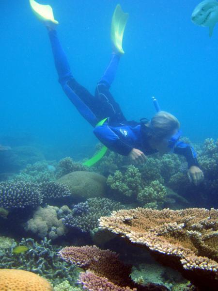 exploration de la barrière de corail...cherchez l'intru!!