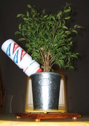 plantesite.jpg