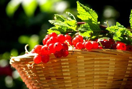 jardinage-bio-biodynamique-339.jpg