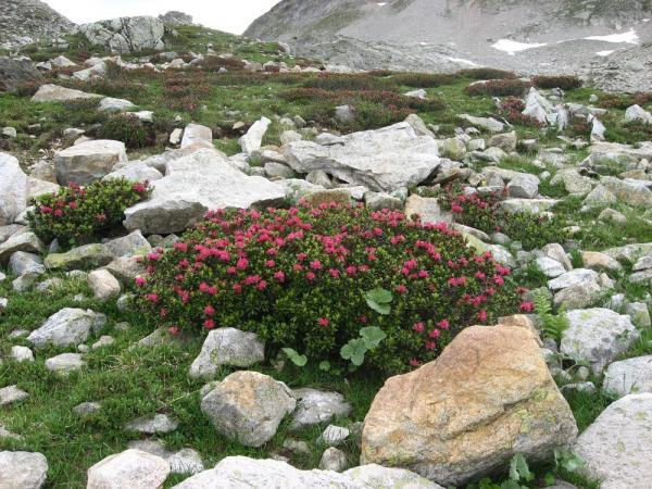 Massif Rhododendron-Fremamorte.jpg