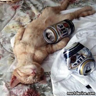 chat-alcoolique_lfj[1].jpg