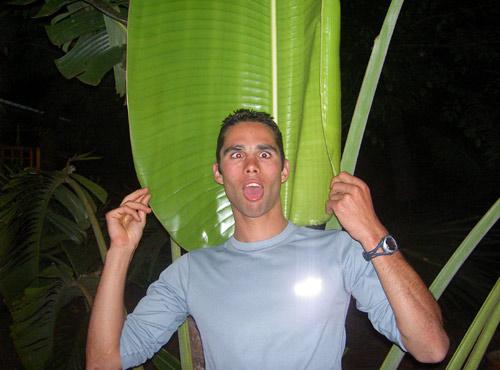 palmier ouvert